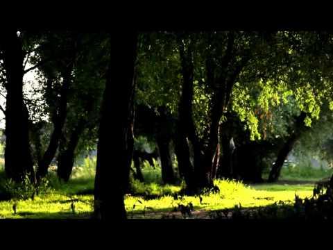 Bachgroun Video Nature Full HD [ Free Download ]