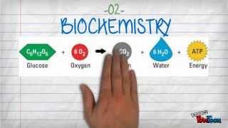 Video 5 Branches of Chemistry download MP3, 3GP, MP4, WEBM, AVI, FLV Juni 2018