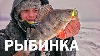 Еду в Boatprofi. Ловля окуня на Рыбинке. Фишки оснащения снегохода от Дмитрия Зюзина