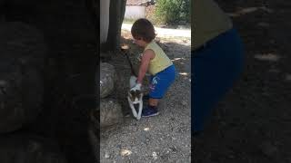 kedi ve beyazıt arasındaki aşk, Eğlenceli çocuk videosu
