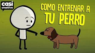 Cómo entrenar a tu perro | Casi Creativo