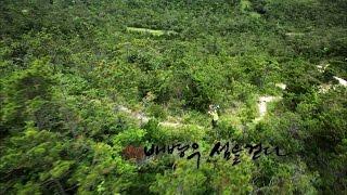 [특집다큐] 섬은 살아있다2 3부 배병우 섬을 걷다(2013년작)
