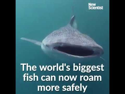 Sharks now protected no matter whose waters they swim in