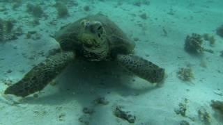 Schnorcheln am Ningaloo Reef, West-Australien