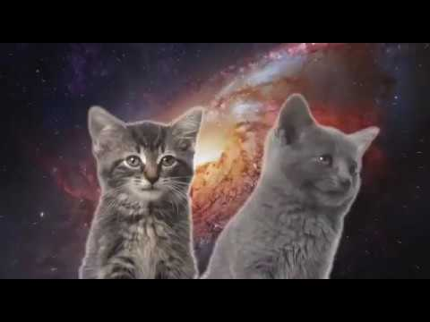 Кота зависимость песня