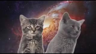Песня кошечек