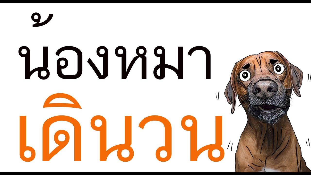 สุนัขขาหลังไม่มีแรง รักษา หมาชักเกร็ง น้ำลายฟูมปาก หมาซึม ไม่กินข้าว น้ำลายไหล สุนัขมีอาการสั่น หอบ