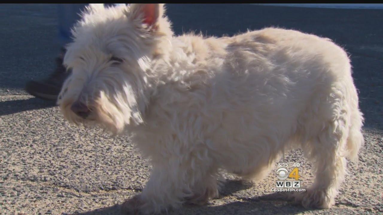 Orange Dog Owner Praises Pet For Real-Life 'Lassie' Rescue
