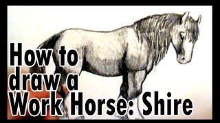 How to draw a work horse: Shire