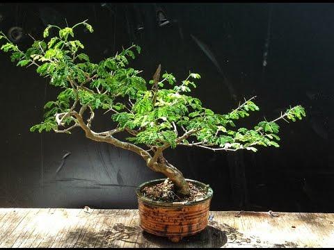 Coolest Bonsai Trees