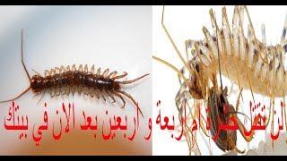 لن تقتل حشرة ام اربعة و اربعين بعد مشاهدتك هذا الفيديو مره اخري Youtube