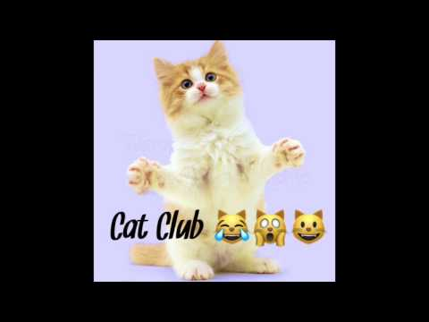 Cat Club - Children's Bedtime Story/Meditation