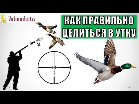 Как стрелять утку влет смотреть видео обучения