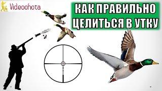 Как ПРАВИЛЬНО целиться в утку на охоте? Videoohota