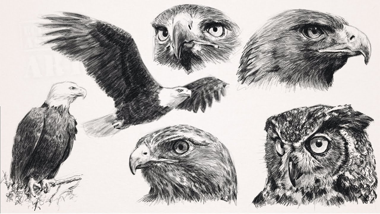 Draw Raptors Birds Of Prey With Step By Step How To Printouts Youtube