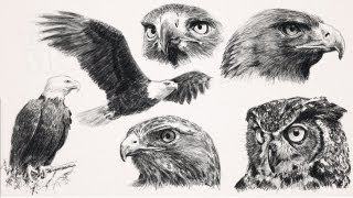 Draw Raptors : Birds of Prey with step by step how to printouts