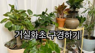 겨울 거실화초