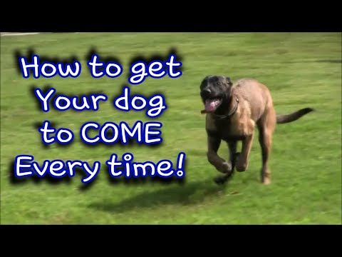 "How to have your dog  ""COME"" every time!"