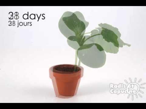 le potiron, c'est facile à faire pousser ! - youtube