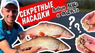 Рыбалка на реке Припять НОВЫЕ Насадки Крупный подуст и лещ Рыбалка на фидер