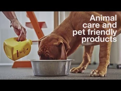 Aloe Vera for Animals   David Urch Speaks About Pet Friendly Products