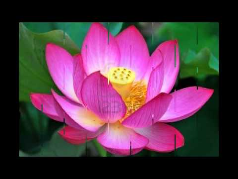 97 mb lotus flower song free download mp3 the lotus flower song mightylinksfo