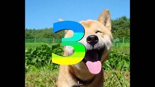 Śmieszne zwierzęta#3