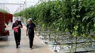 Hoogendoorn Mexico - Agricol El Rosal in La Piedad