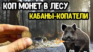 Коп монет в лесу,кабаны копатели/перезалив авторка/