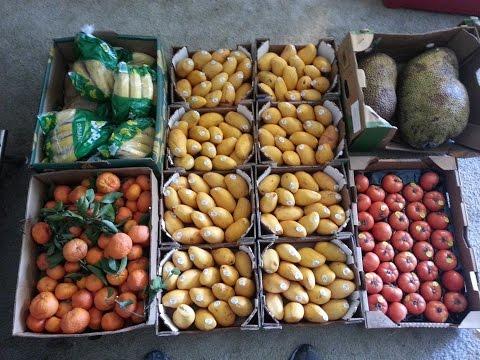 Monster Wholesale Fruit Haul