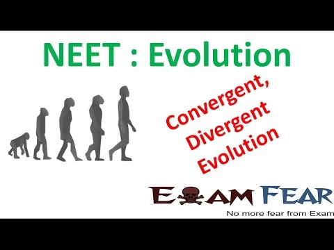 NEET Biology Evolution : Convergent and Divergent Evolution