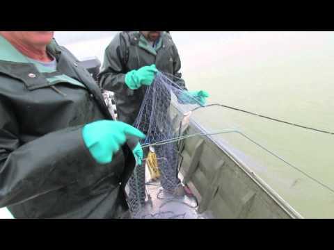 FishTales Special Report