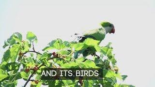 Hidden New York: The parrots of Green-Wood Cemetery