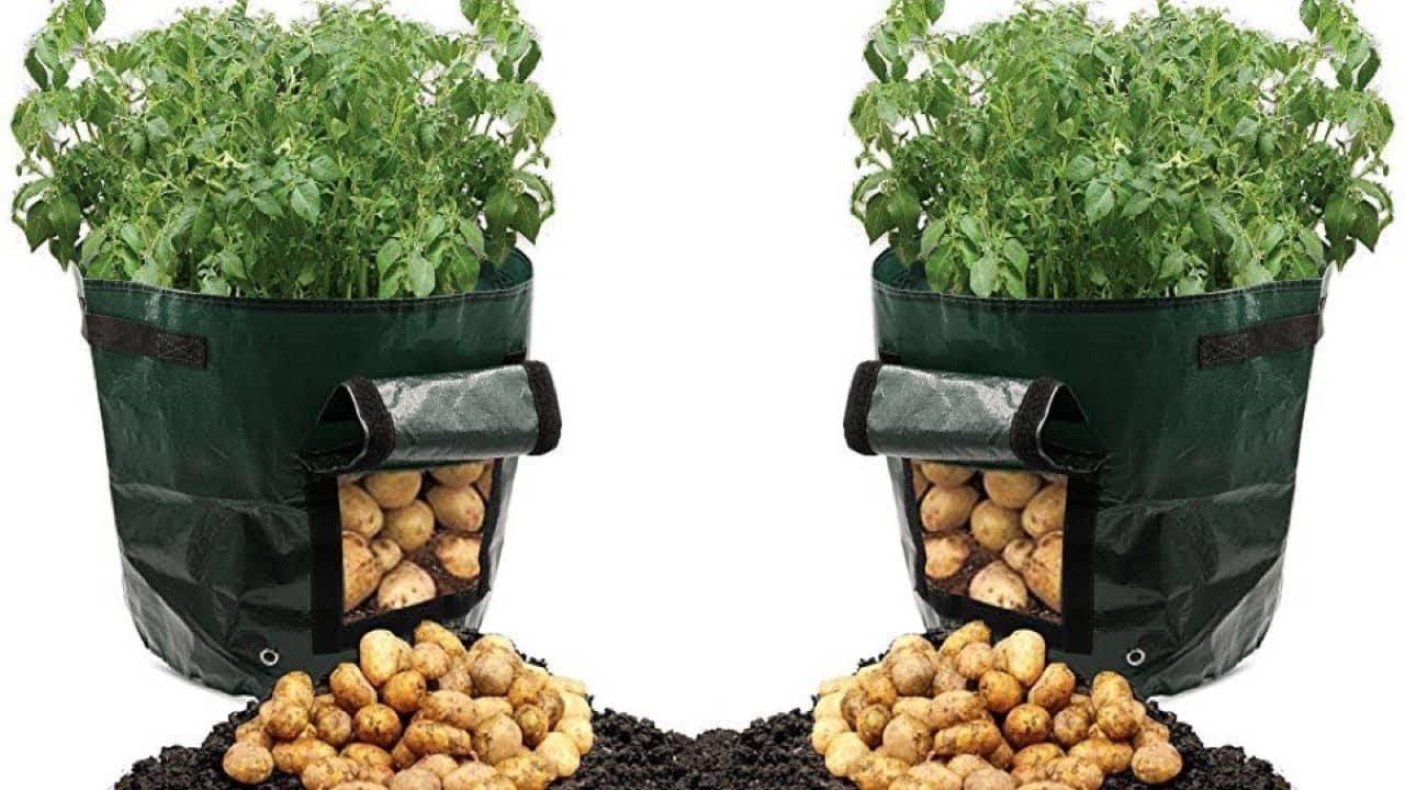 Wie Du Kartoffeln Ganz Einfach In Einem Plastiksack