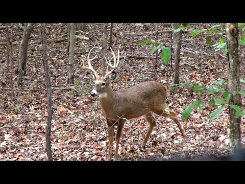 Giant Buck at 15 Yards (Everything Goes Wrong)