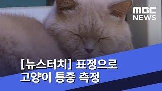 """[뉴스터치] """"얼굴만 봐도 알아요""""…표정으로 고양이 통…"""