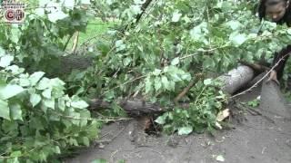 Дерево упало во дворе дома.(, 2012-06-07T19:44:38.000Z)