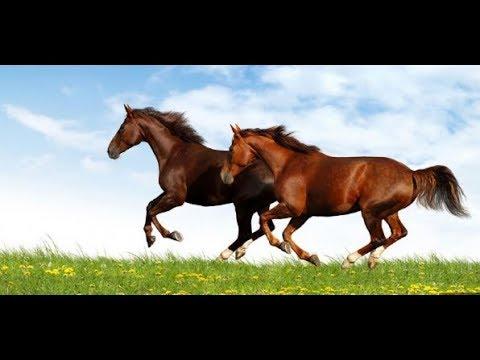تفسير حلم الحصان البني في المنام Youtube