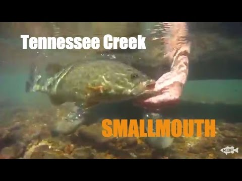 Kayak Fishing Tennessee Creeks: GIANT SMALLMOUTH - Pt. 1