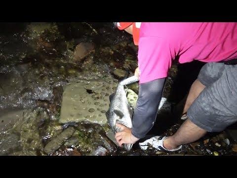 【男二人離島キャンプ#2】カヤックで釣った魚で現地飯‼