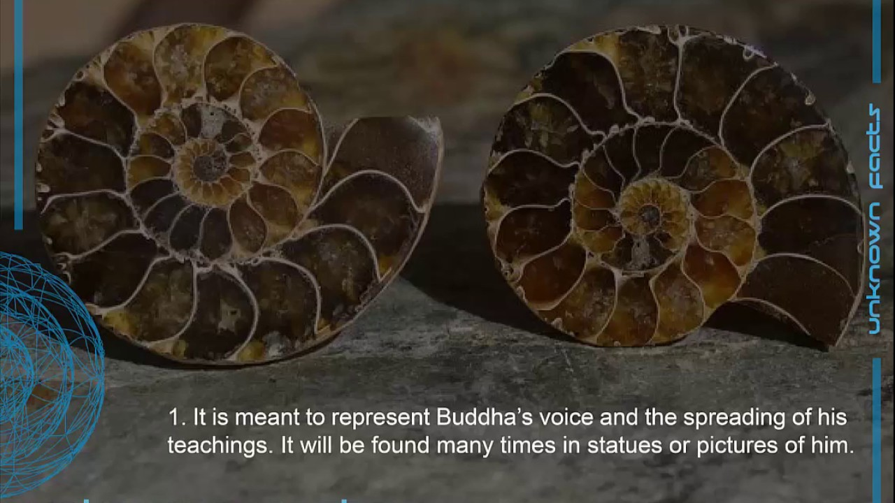 7 Things You Didnt Know About The Feng Shui Conch Shell Youtube