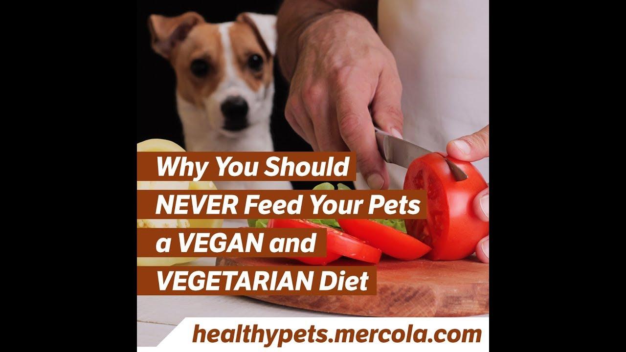 vegan diet for pets
