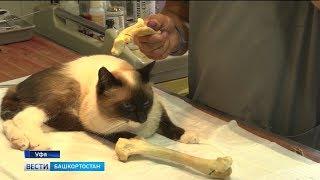 Впервые в мире: в Уфе ветеринары пересадили кошке кость со здоровой лапы на сломанную