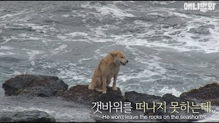 Why this stray dog stays on the rocky shore despite the crashing waves..