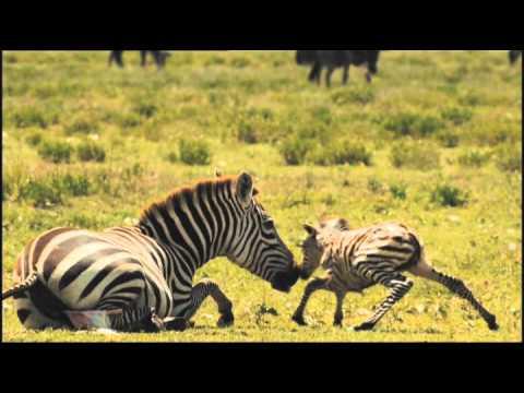 Serengeti Trailer 1 Deutsch HD (Ofizieller Trailer)