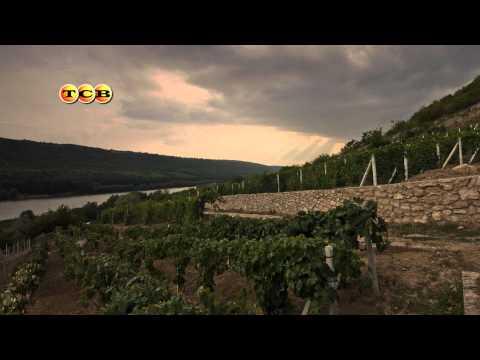 Маклер Тирасполь  - Доска объявлений онлайн