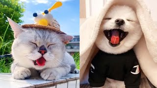 Funny cat - Cute and Funny Baby Cat  Videos Compilation #22    koko animals