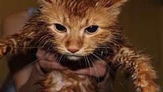 Как помыть кота при медленном интернете