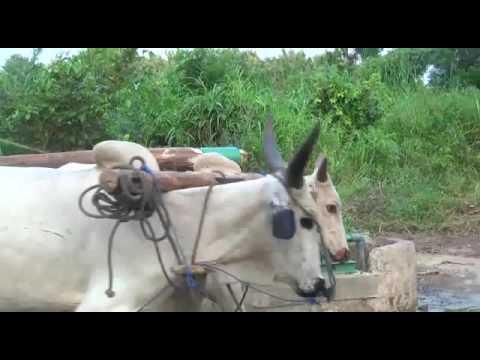 """PANCHAL"" Animal Driven Pump (""पांचाल"" बैल चालित पंप) at Loom, Togo"