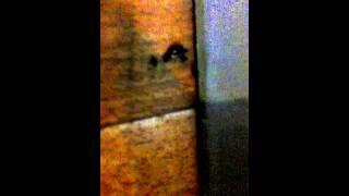 видео уничтожение тараканов